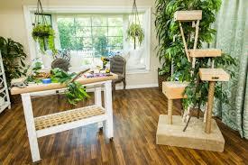 diy outdoor cat tree house designs
