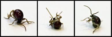 bed bugs in bathroom. The Great Brooklyn Bed Bug Scare Bugs In Bathroom