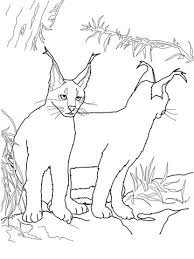 Small Picture Caracal Kittens coloring page Free Printable Coloring Pages
