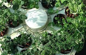 smart herb garden starter kit outdoor hydroponic garden