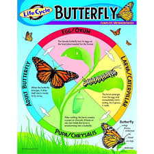 Chart Life Cycle Of A Butterfly Life Cycles Life Cycle