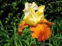 120 botanical baby names house plant