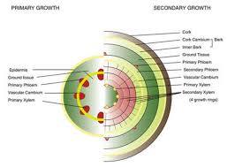 Plant Growth Biology For Majors Ii