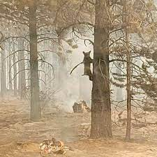 Bootleg Fire now 3rd largest wildfire ...