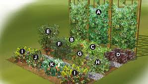 Small Picture Vegetable Garden Plan