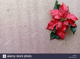 Rot Weihnachtsstern Blume Auf Goldenen Glitzer Hintergrund