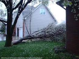 Tree Permits, Removal and Concerns | Department of Environmental ...
