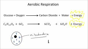 aerobic and anaerobic respiration part 1 of 2 gcse science biology get to know science
