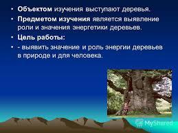 Презентация на тему Тема Энергетика деревьев РЕФЕРАТ Тема  4 Объектом