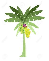 Small Picture Banana Leaves Coloring Pages Coloring Coloring Coloring Pages