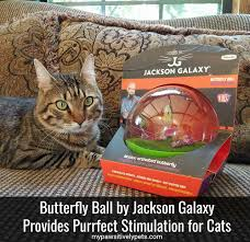 last may i was introduced to a product that i absolutely fell in love with petmate sent over the erfly ball by jackson galaxy for my cats to try out