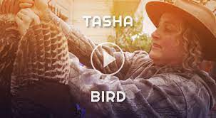 Tasha Bird - Symbiosis Gathering: Family Tree