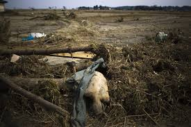 environment fukushima essay jpg