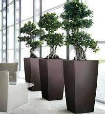 modern office plants. Plants For The Office One Benefit Of Is That They Add Elegance To . Modern O