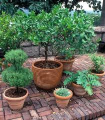 Outdoor Container Herb Garden Design And Herb Garden Design In Container Herb Garden Plans