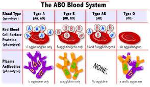 Abo Blood Type Chart Blood Types Chart Know It All