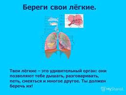 Презентация на тему Всё о вдохе и выдохе Береги свои лёгкие  4 Береги свои лёгкие