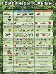 Kale Companion Planting Chart Companion Planting Chart Lots Of Great Info Video Tutorial