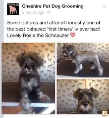 groomer help desperate from wirral