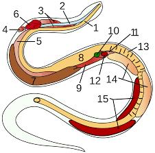 Image result for alati protiv zmija