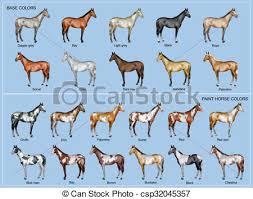 Foal Color Chart Horse Color Chart