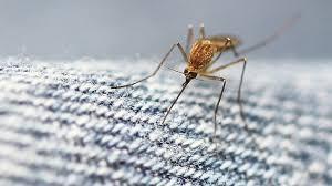Как выбрать <b>средство</b> для <b>защиты от комаров</b> - Инструкции и ...