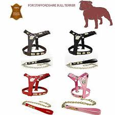 Staffy Colours Chart Friendly Green Bull Terrier Dog Harness Or Short Standard