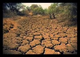 Image result for image of famine