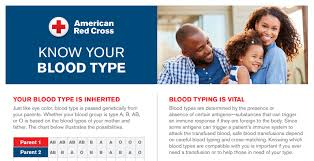 Blood Type Compatibility Download Red Cross Blood Services