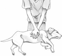 New Guidelines For Cpr In Dogs Cats American Veterinary