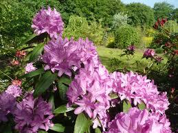 """Résultat de recherche d'images pour """"gifs rhododendrons"""""""