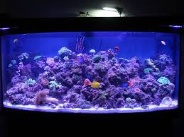 ralph friends reef tank from facebook lighting my 72 gallon bow front with 7 48 mixed stunner strips love the way they make my cs and fish glow