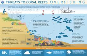 Coral Classification Chart How Does Overfishing Threaten Coral Reefs