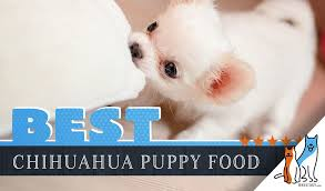 Simply Nourish Large Breed Puppy Food Feeding Chart The 9 Best Chihuahua Puppy Foods With Our 2019 Most