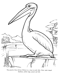 pelican animal coloring pages