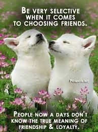 Cute Friendship Quotes Best Friendship Quotes Inspiration Adorable Friend Quotes