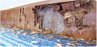 Image result for overall cost of the termite control service