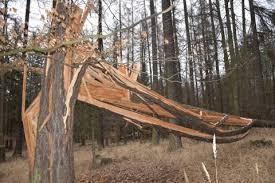 Výsledek obrázku pro souše v lese