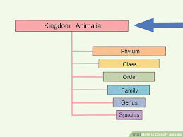 Table kingdom animalia Characteristics Image Titled Classify Animals Step Slideplayer How To Classify Animals 15 Steps with Pictures Wikihow