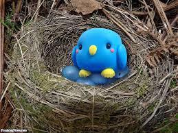 direct image link bluebird makes blue eggs