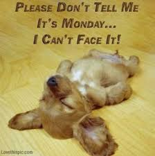 Monday Quotes Funny Beauteous 48 Funny Monday Quotes