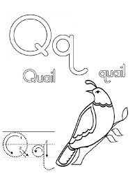 Small Picture Preschool Letter Q is for Quail Letter Q Coloring Page Preschool