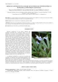 (PDF) BRIMEURA AMETHYSTINA (L.) SALISB. (HYACINTHACEAE ...