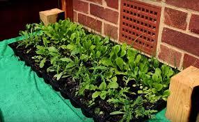 how to make a raised garden. Start Vegetable Seedlings | How To Make Raised Garden Beds A Practical Season Guide