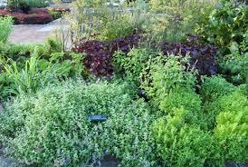 ... Growing an Herb Garden ...