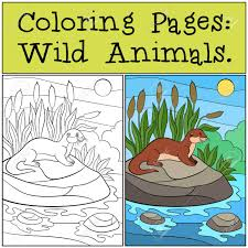 Coloring Pages Wild Animals Little Cute Otter Stands On The