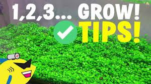 Aquarium Carpet Plants Low Light 10 Best Aquarium Carpet Plants For Your Fish Tank