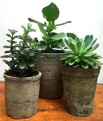rustic flower pots dusty black plant metal garden planters