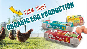 Organic Egg Farm Tours Organic Valley