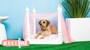 DIY Princess Canopy Pet Bed | Pet Projects - YouTube